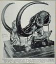 Objets du Redpath Museum - rue Sherbrooke [image fixe]